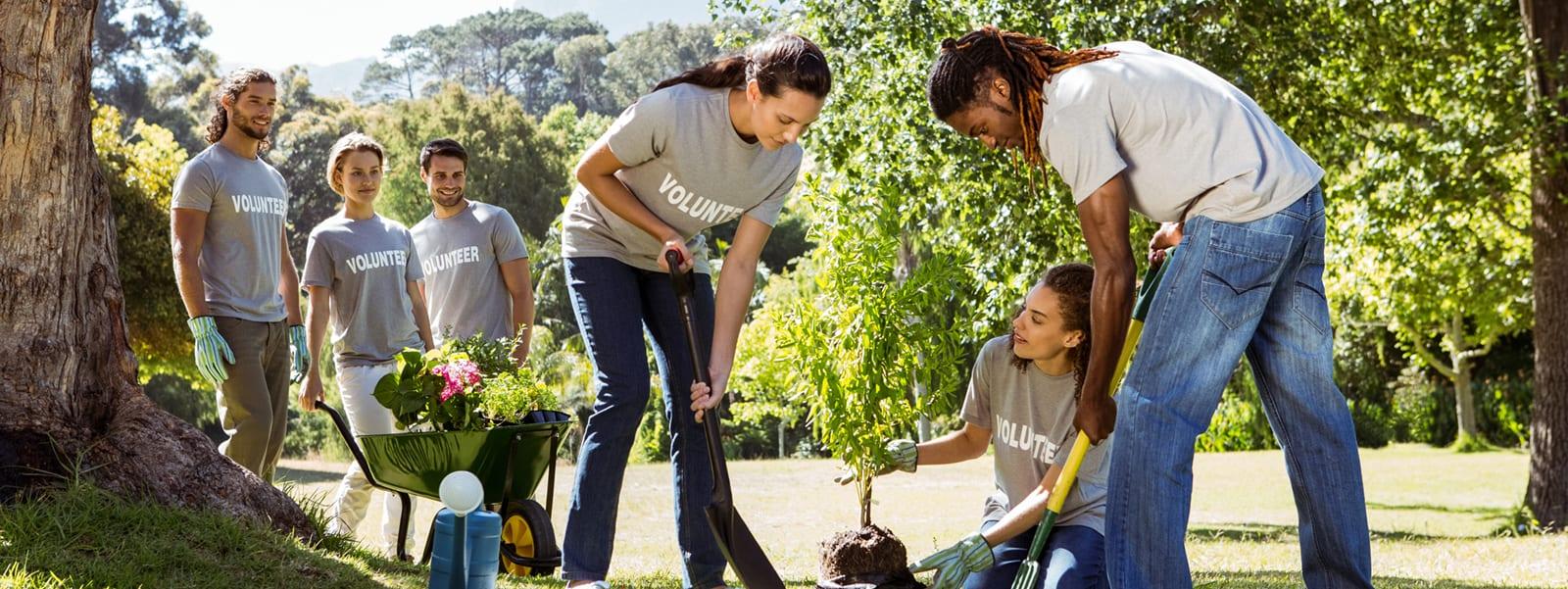 Volunteers gardening